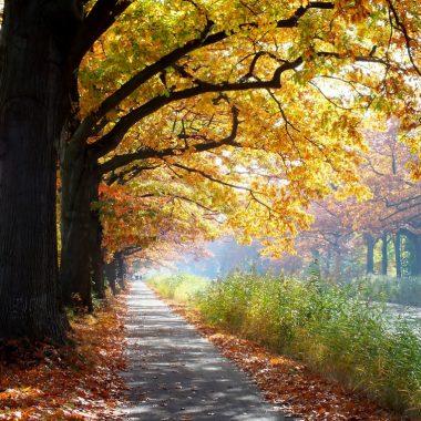 herfst-teuge